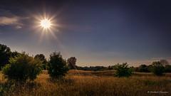 Summer evening mood (Norbert Clausen) Tags: star stern abendstimmung graslandschaft sunburst