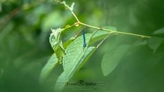 DSC_2929 (Franck.H Photography) Tags: macro insectes araignée coccinelle