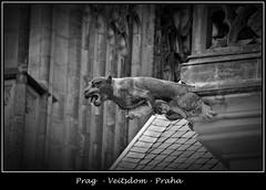 Gargoyles - 25 (fotomänni) Tags: prag prague praha gargoyles gargouille wasserspeier skulptur skulpturen veitsdom blackwhite schwarzweis noirblanc manfredweis