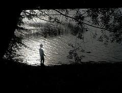 Magie de la lumière (agnès moisuc) Tags: ombre lumière lac silhouette feuilles arbre eau roseaux