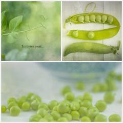 Summer peas (jm atkinson) Tags: 52stilllifes2952 delicious summerpeas green bokeh collage garden maine