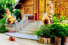 The Temple Guard (The Hobbit Hole) Tags: asia d700 nikon 2470mmf28g chiangmai thailand