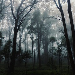There is beauty in the darkness.... (faerymama) Tags: nature trees australian bush woodland creepy eerie haunted enchanted faerie fog mist mists foggy forest moody misty southernhighlands bowral australia