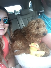 Ruby Red and Spanky's Ditto on her way home with her family