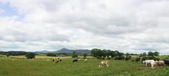 Timeless (Elisafox22 slowly catching up again!) Tags: elisafox22 sony rx100 52in2017 week30 landscape agriculture cattle panorama fields trees sky clouds bennachie hill aberdeenshire scotland elisaliddell©2017