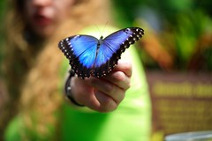 (marcelluskibby) Tags: biology nature blue 5diii canon cool beauty garden park color butterfly