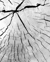 Cracked (WilliamND4) Tags: crack cracked wood iphone