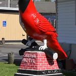 Cardinal Motel - Bowling Green, KY thumbnail