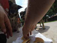 Lunchtime (Andrew Penney Photography) Tags: mcdonalds burger dogs fries eat food junkfood dog lunchtime lunch backyard
