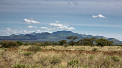Tsavo West MARK III-0649 (ovg2012) Tags: kenia kenya tsavo tsavowestnationalpark