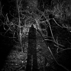 The Morning Walk #21 (LowerDarnley) Tags: holga morningwalk woods selfshadow morninglight trees branches