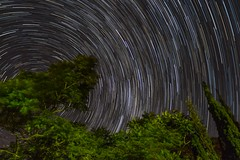 Day 198-365: Not waving, spinning (LivingStone Images) Tags: 17jul17 2017 365the2017edition 3652017 astrophotography day198365 milkyway night objects southerncross startrail stars timelapse tree trees vegetation