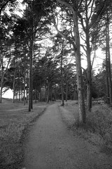 (sbjorn63) Tags: europe blackandwhite scandinavia tree monochrome sweden path ystad