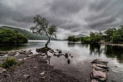 Lone tree, Llanberis, Wales, UK (1) (Nick Bowman1) Tags: wales llynpadarn sonyilca99m2 lonetree sonyzeiss1635f28zassm uk llanberis