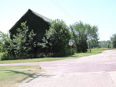 Ivy covered Barn (Andrew Penney Photography) Tags: random construction projects work