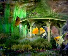 -- fish at home -- (xandram) Tags: fish gazebo tt texturesmyown photoshop