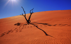 Namibia red desert (3dgor 加農炮) Tags: desert deadvalley valley namibia red