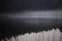 sound of silence III (Mindaugas Buivydas) Tags: lietuva lithuania color spring april forest pond tree trees night twilight evening fog mist blue mystery verkiųregioninisparkas verkiairegionalpark shallowdepthoffield mood moody dark darkness mindaugasbuivydas elkhollow