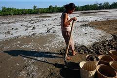 Salt making in Ulmera - 17-09-09-3 (undptimorleste) Tags: timorleste hard labor pans salt seaseaslat ulmera woman women work