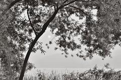 leaf (withcamera) Tags: leaf ungilsanriverside agardenofwaterblackandwhitephoto bwphoto photo beautyofkorea nikon nikondf 24~70lens joanmyeon namyangjuci gyeonggido southkorea 한국의미