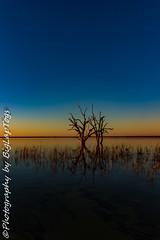 IMG_5427 (biglaptogs) Tags: barmera lakebonney riverland sa states sunsetsunrise