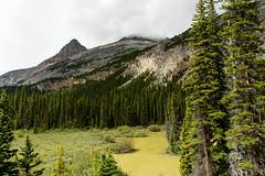 Along the Trail to Bow Glacier Falls (tylerhuestis) Tags: banff banffnationalpark alberta canada nationalpark nature landscape