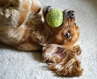 Poppy's still still having a ball!