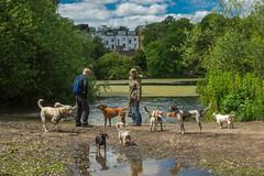 Dog Walkers (Viv Lynch) Tags: england europe london travel uk unitedkingdom hampsteadheath park greenspace northlondon dogs dogwalker pond