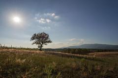 Campagna aretina - Luglio 2017 (masowar (often off, sorry!!)) Tags: rosso toscana tuscany arezzo provinciadiarezzo albero tree sunset sunshine backlight campagna country countryside nikon nikond800 filters filtri grass erba tripod massimilianoa massimilianoacquisti ©massimilianoacquisti nikkor