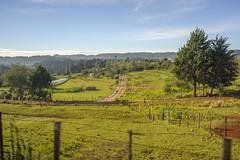 Los Caminos (ruimc77) Tags: nikon d700 nikkor 28mm f28 ais milpa camino caminos los altos san juan cancuc chiapas mexico méxico rural landscape paisaje paisagem