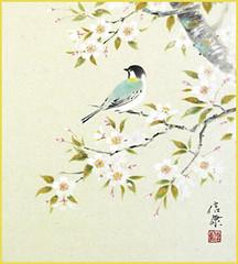 Cherry and great tit (Japanese Flower and Bird Art) Tags: flower cherry prunus rosaceae bird great tit parus major paridae nobuyasu hotta nihonga shikishi japan japanese art readercollection