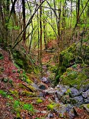Difficult roads often lead to beautiful destinations...️⛰️ (carlesbaeza) Tags: cami camino road montaña mountain naturaleza nature tree travel catalunya catalonia muntanya ngc