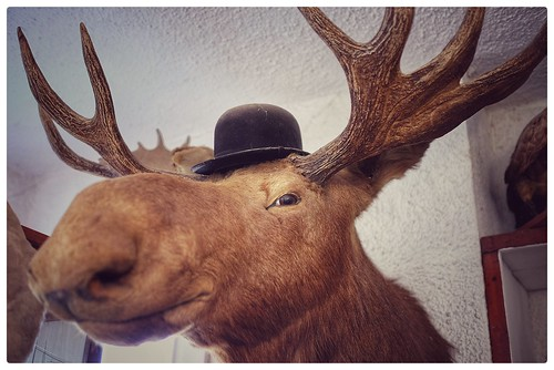 "So, this moose walks into a bar .... • <a style=""font-size:0.8em;"" href=""http://www.flickr.com/photos/150185675@N05/35844570486/"" target=""_blank"">View on Flickr</a>"