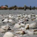 Kagylók thumbnail