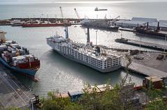 MV Ocean Drover, Napier Port, New Zealand - 21/7/17 (Grumpy Eye) Tags: nikon d7000 nikkor 24mm 14 napier port mv ocean drover cattle