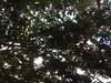365_45 entre flores (cristinaramírezanaya) Tags: chezmoi plants árbol resplandor luz flores