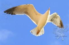 seagull2017_03.jpg