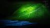 Light leaf (Thomas TRENZ) Tags: enlightenment tamron thomastrenz zwischenring blatt d600 erleuchtung erleutet extensionring extensiontube iamnikon leaf licht light macro makro weinblatt wineleaf