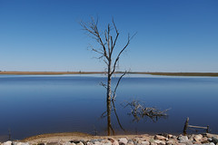 Route 12, South Dakota (vincenzoaru) Tags: southdakota south dakota tree lake ipswich