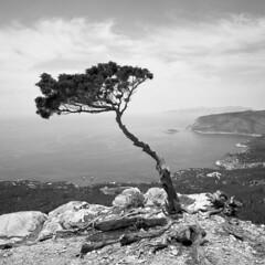 Monolithos - Rodi - May 2017 (cava961) Tags: monochrome analogue analogico bw bianconero rhodes monolithos tree landscape