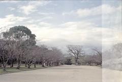 Scan-160308-0003 (Sofa!) Tags: fukuoka 大濠公園 ohoripark