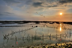 Oyster field 蚵田夕照 (Vincent_Ting) Tags: 蘆竹溝 蚵田 倒影 reflections clouds 雲彩 oysterfield taiwan 台灣 tainan 台南 北門區 蘆竹溝漁港 fishingport sunset 夕陽 tide 潮汐 蚵架 water sea sky vincentting