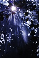 Looking for the light... #nature #bluelight #shadows #unexpected (Kaptured By Kel) Tags: nature bluelight shadows unexpected