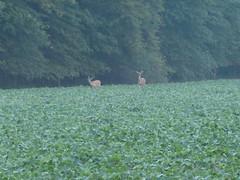 McKee-Beshers Wildlife Management Area Jul 17, 2017, 6-015 (krossbow) Tags: marylanddnr deer fog lumix maryland marylanddepartmentofnaturalresources mckeebeshers mist montgomerycounty morning panasonic photolemur poolesville summer sunrise tz90 wildlifemanagementarea wma zs70