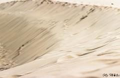 IMG_0384 (Azezjne (Az photos)) Tags: canon 75300 50 stm 600d berck sur mer bercksurmer cote côte dopale bromance plage sable bokeh zoom coucher soleil sunset beach sand eclipse dune mouette animaux animalière flou 75 300