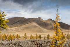 Chuluut Gorge 9355 (Ursula in Aus) Tags: mongolia wtf asia autumn larch trees chuluutrivergorge chuluutgorge