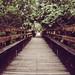 Wooden Bridge Lines
