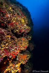 IMG_5980 (davide.clementelli) Tags: scuba underwater underwaterlife diving dive immersione portofino colori colors colore color fishes fish pesci