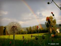 rainbow (skistar64) Tags: regenbogen rainbow sommer summer summertime wiese meadow natur nature daham drausen outside outdoor pisweg kärnten carinthia