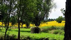La cabane.... (LILI 296...) Tags: tournesols jaune canonpowershotg7x campagne gers france midipyrénées nature été summer yellow